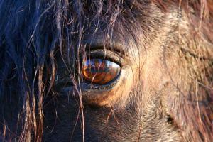 eye-101006