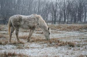 snowhorse-120506