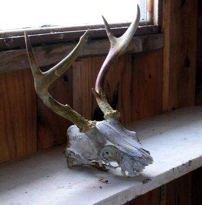 skull-040606