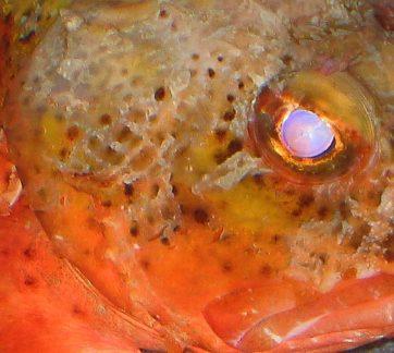 badfish-071605