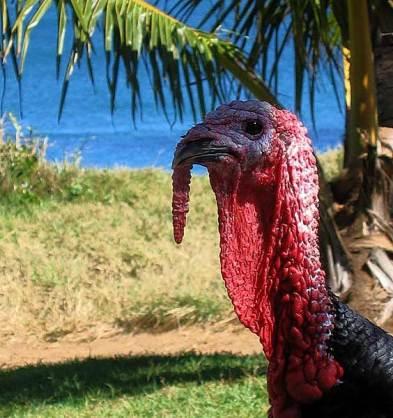 turkey-080905